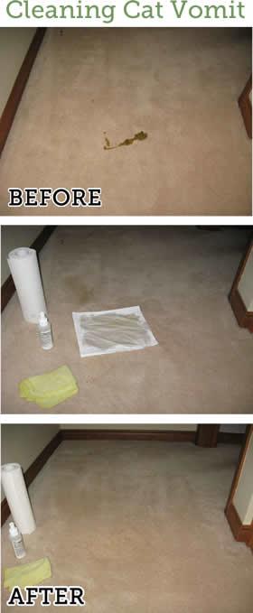 EatOIls cleans up cat vomit